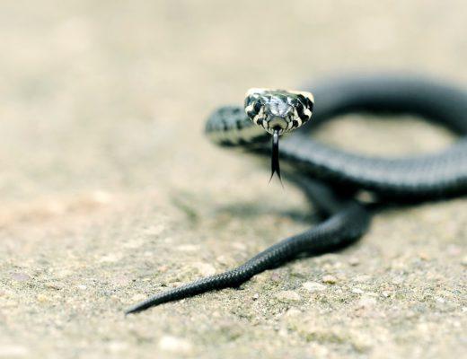 Carolicia e a Serpente - arquétipo de fortalecimento